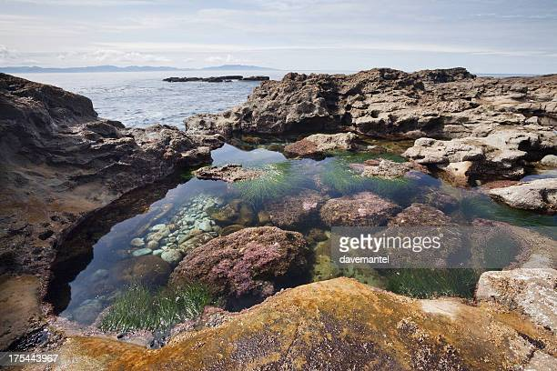 Botanical Tidal Pool