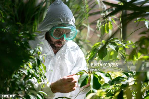 Botanist at a greenhouse checking the plants and wearing protective goggles and overall