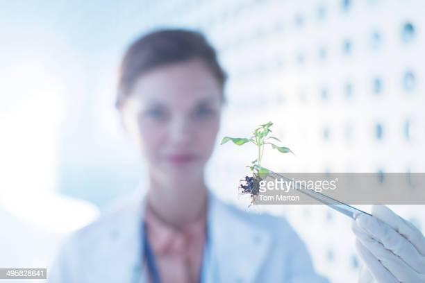 Botanist holding plant with tweezers