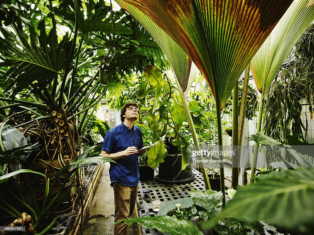 Botanist in greenhouse with digital tablet : Stock Photo