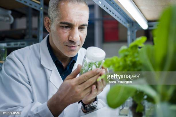 botanist lifting indoor farming rack to check crop growth - photosynthesis stock pictures, royalty-free photos & images