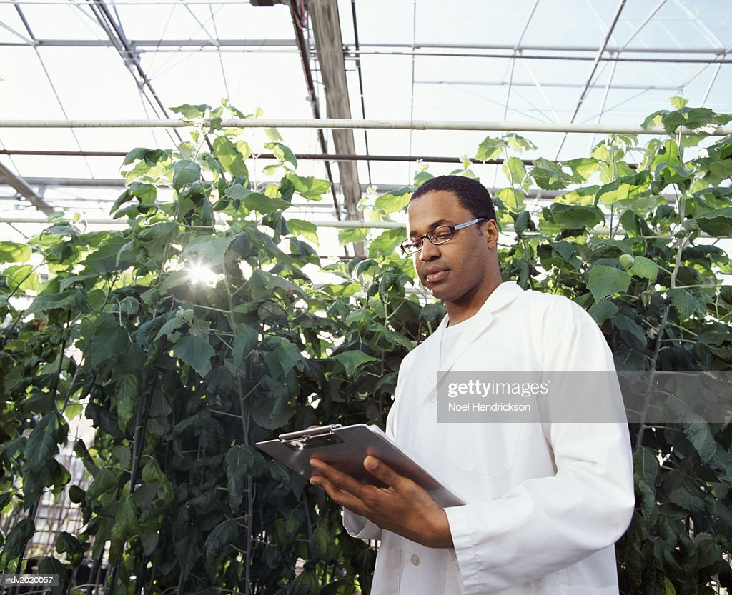 Botanist Looking Down at a Clipboard in a Greenhouse : Stock Photo