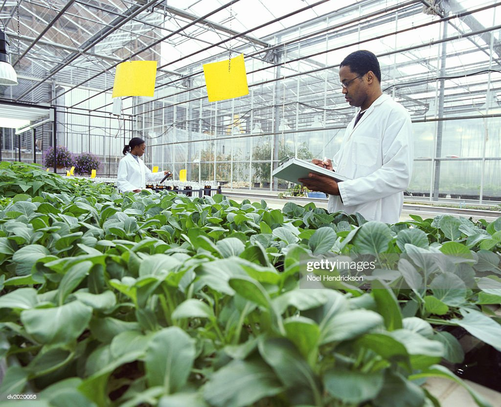 Botanist Making Notes on a Clipboard in a Greenhouse : Stock Photo