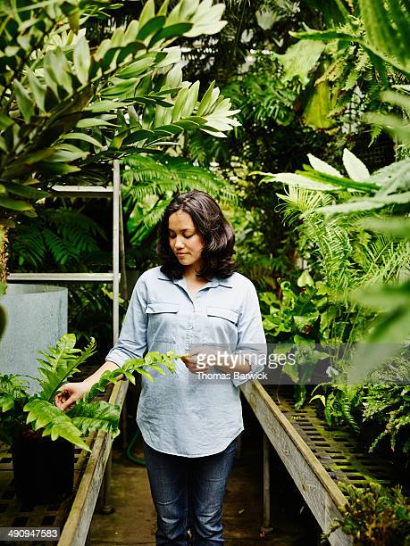 Botanist touching fern in research greenhouse
