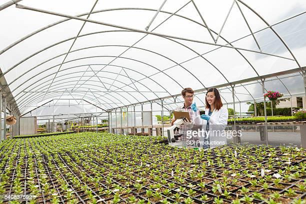 Botaniker im das Labor