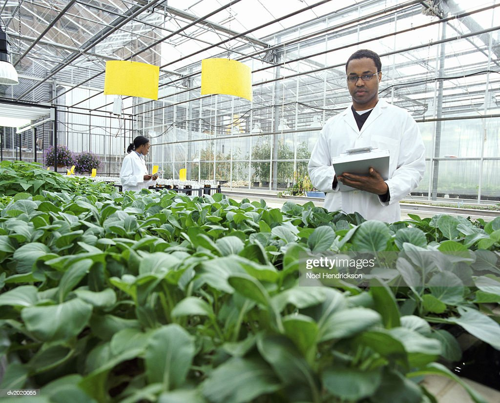 Botanists Examining Plants in a Greenhouse : Stock Photo
