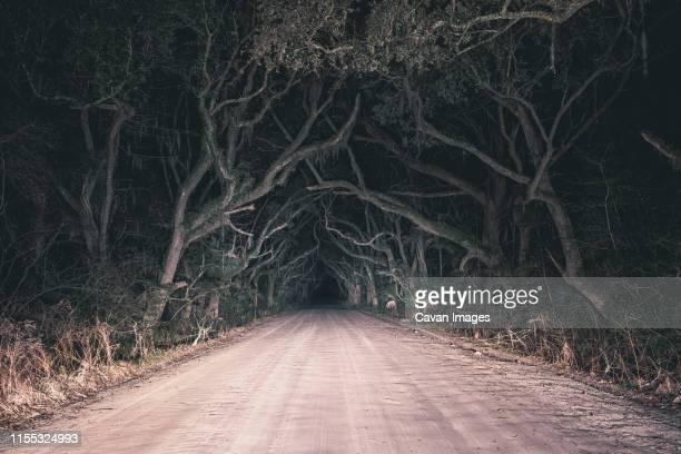botany bay old oak tree road at night in edisto island, south carolina, usa - south stock pictures, royalty-free photos & images