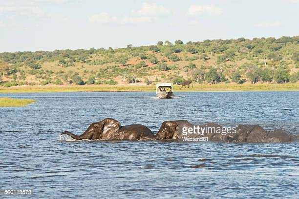 Chobe River Stock Photos And Pictures Getty Images - Chobe river