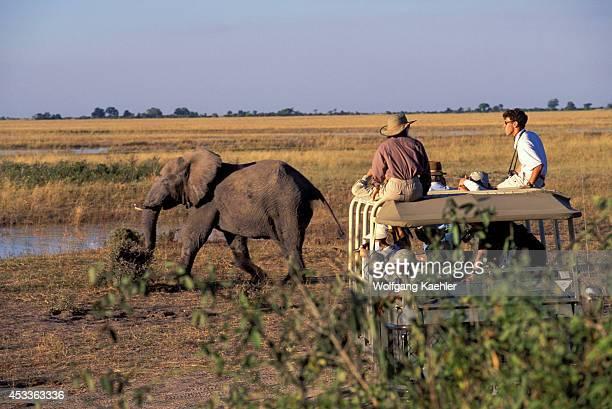 Botswana Chobe National Park Tourists Watching Elephants
