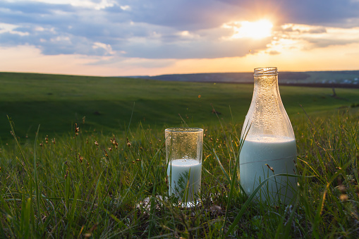 Bottle and glass with milk on the grass against a backdrop of picturesque green meadows with flowers at sunset summer day. Fresh organic food. Natural energy. 1148061578
