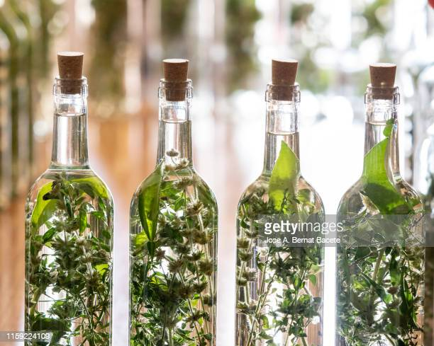 bottle filling and preparation of traditional liqueur based on anise and moonshine with aromatic herbs, (herbero). - liqueur stock pictures, royalty-free photos & images