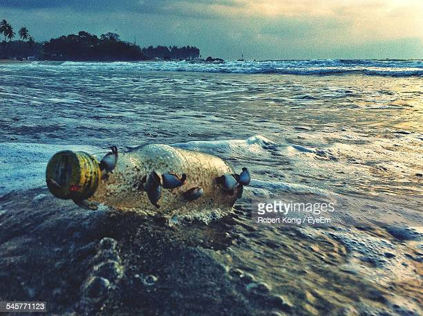 Bottle Floating On Water At Sea Shore