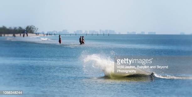 bottle nosed dolphin splashes into shore with people in background at fort myers beach - fort myers beach stock pictures, royalty-free photos & images