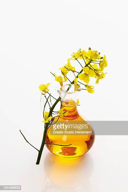 bottle of fresh canola oil with rapeseed flowers - brassica rapa stock photos and pictures