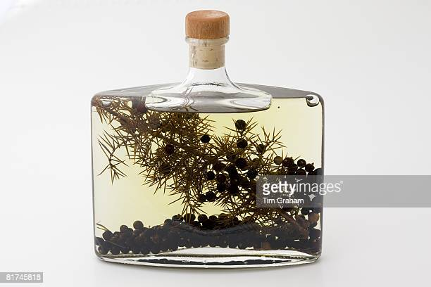 Bottle of herbinfused olive oil with juniper berries London England United Kingdom