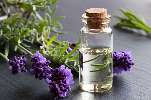 A bottle of lavender essential oil with fresh lavender twigs 920637186