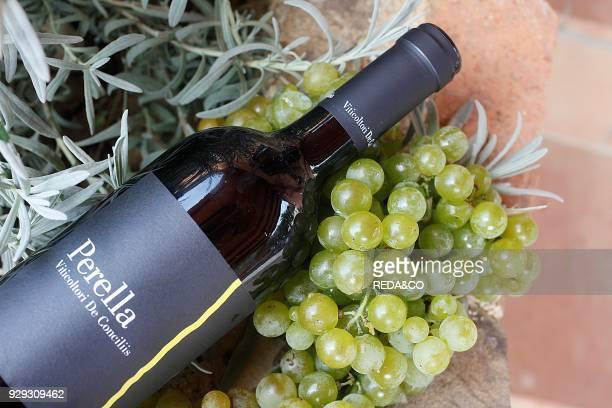 Bottle of Perella wine De Conciliis farm Prignano Cilento Cilento and Vallo di Diano National Park Campania Italy