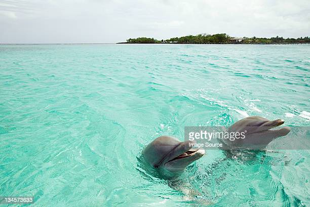 Bottlenose dolphins emerging from sea