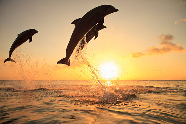 Bottlenose Dolphins Wall Art