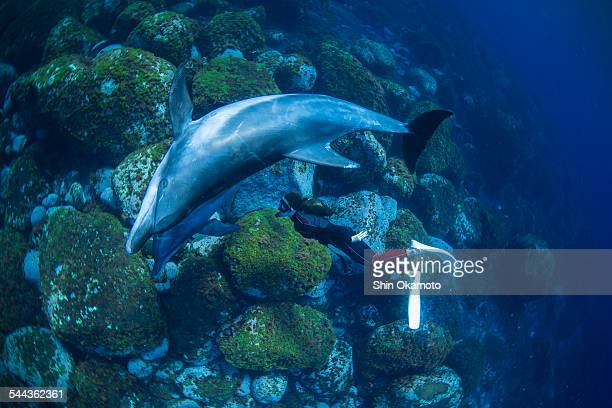 Bottlenose Dolphins swimming