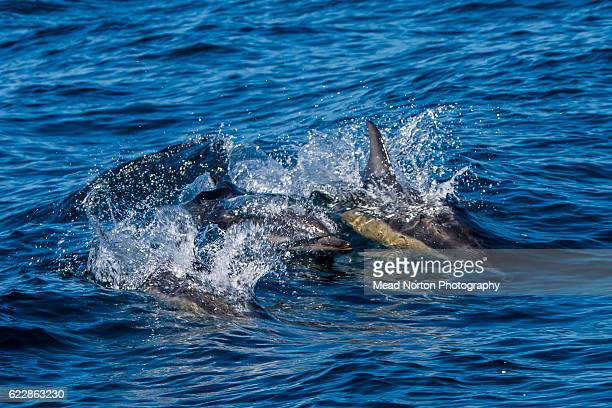Bottlenose dolphins were hanging around Jervis Bay during the Adventure Race World Championship on November 10 2016 in Ulladulla Australia