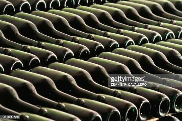 Bottles of wine aging in a cellar Gallo d'Alba Piedmont Italy