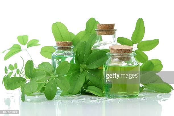 Flaschen mit Kork Komposition und grünen Blättern