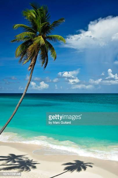 bottom bay, barbados - idyllic stock pictures, royalty-free photos & images