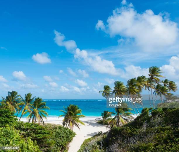 playa de la bahía de fondo y palmeras en barbados - caribe fotografías e imágenes de stock