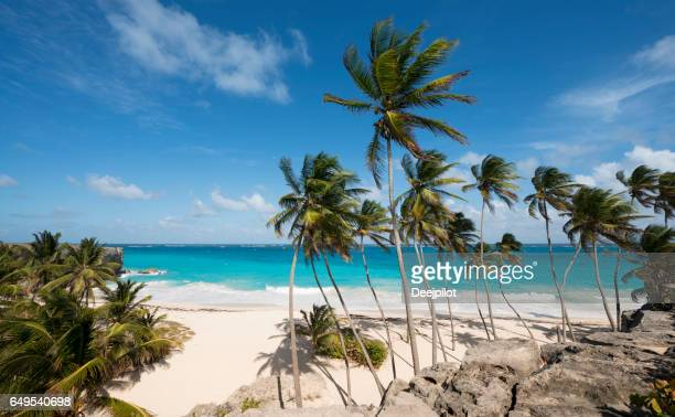 Bottom Bay Beach and Palm Trees in Barbados