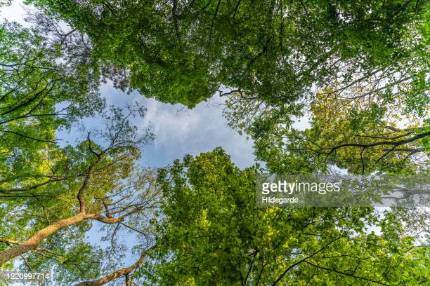 bottom view of forest - at the bottom of stock pictures, royalty-free photos & images