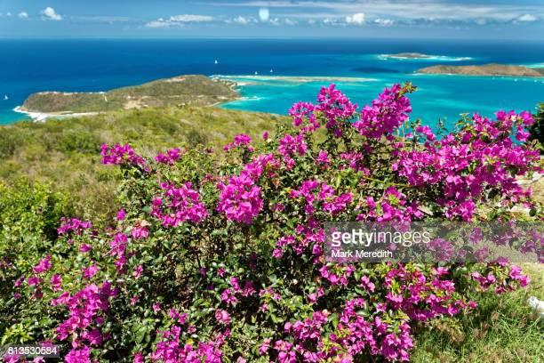 bougainvillea at gorda peak national park, virgin gorda, british virgin islands - islas de virgin gorda fotografías e imágenes de stock
