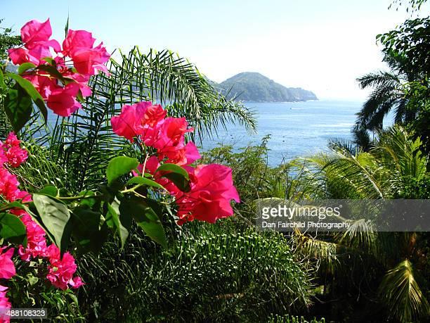 bougainvillea blossoms and zihuatanejo bay - ixtapa zihuatanejo fotografías e imágenes de stock