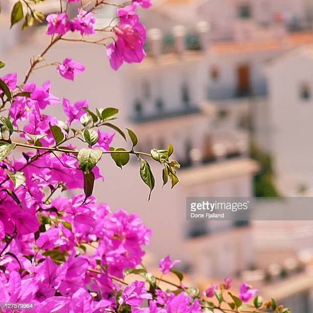 Bougainvillea in front of Andalusian white village