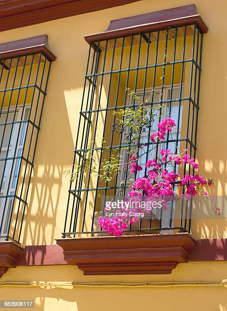 bougainvillea on colourful terrace - lyn holly coorg stock photos and pictures