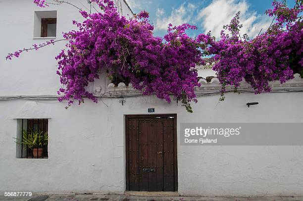 Bougainvillea over wooden door