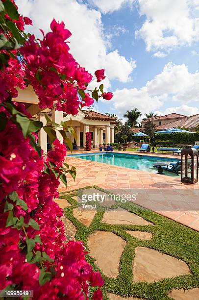 bougainvillea - florida landscaping stock pictures, royalty-free photos & images