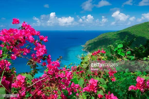 Bouganvilla flowers and coast line on St. Thomas. US Virgin Islands.