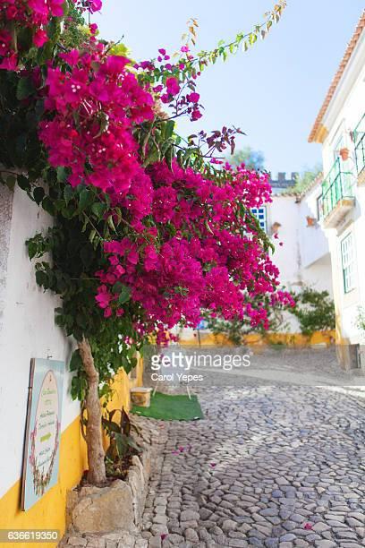 bouganvilla in Obidos street, Portugal