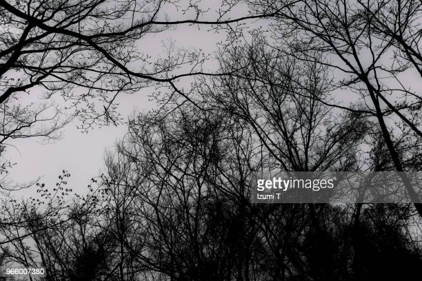 bough - bare tree stock pictures, royalty-free photos & images