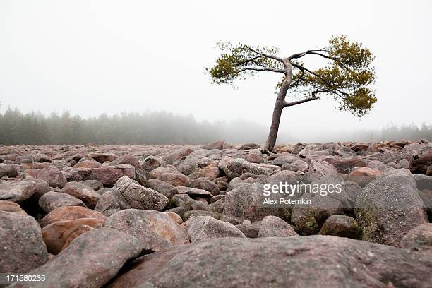 boulder field, hickory run state park, pennsylvania  - state park stock pictures, royalty-free photos & images