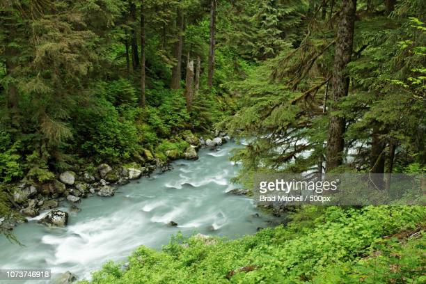 Boulder River running through forested canyon, Boulder River Wilderness, Mount Baker-Snoqualmie Nati