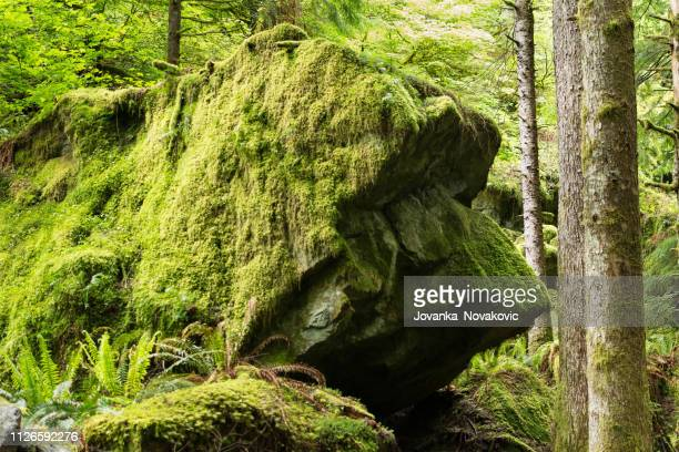 boulder shaped like a dog - moss stock pictures, royalty-free photos & images