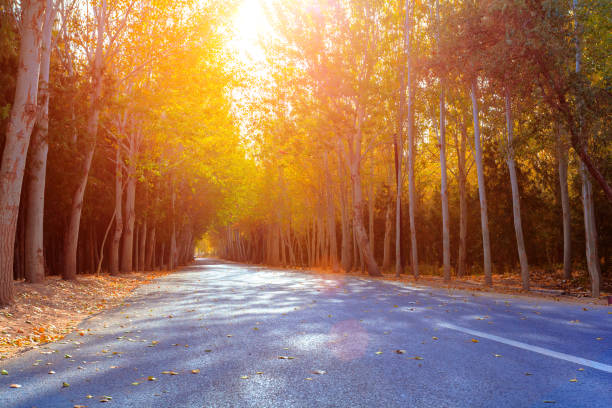boulevard, gansu, china - tree lined boulevard stock pictures, royalty-free photos & images