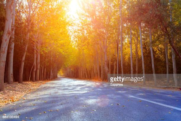 boulevard, gansu, china - boulevard stock pictures, royalty-free photos & images