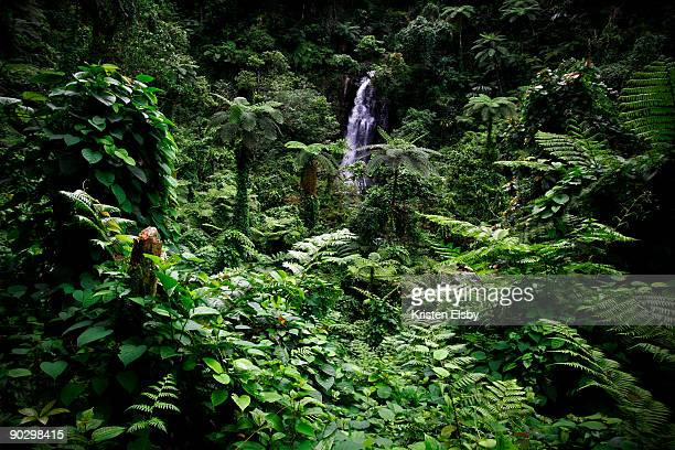 bouma national park rainforest - fiji stock pictures, royalty-free photos & images