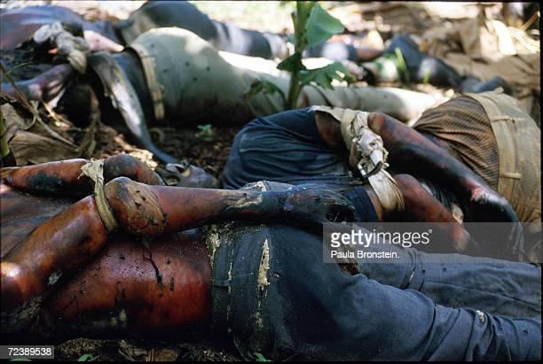 Bound bodies of Tutsi genocide victims lie on the ground in the RebezoBirenga sector of Rwanda May 1994 Hutu militias seeking to rid Rwanda of Tutsis...