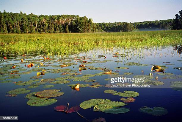 boundary waters canoe area - boundary waters canoe area stock pictures, royalty-free photos & images