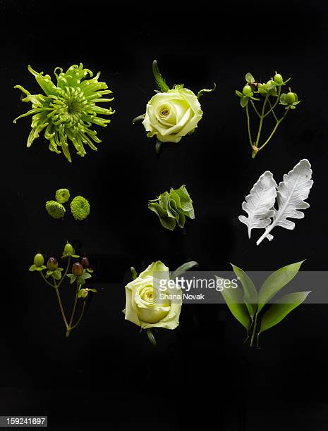Bouquet, Dissected