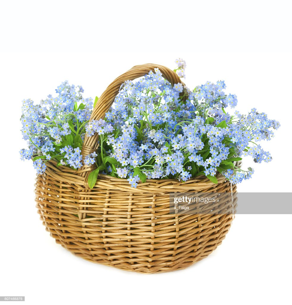 Bouquet Of Blue Spring Flowers In Basket On White Background Stock